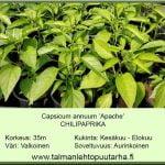 Capsicum annuum 'Apache' Chilipaprika