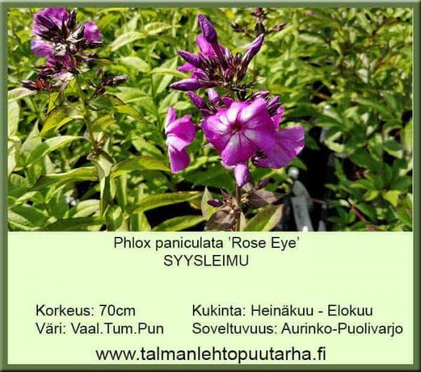 Phlox paniculata 'Rose Eye' Syysleimu