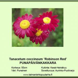 Tanacetum coc. 'Robinson Red' Punapäivänkakkara