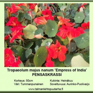 Tropaeolum majus nanum 'Empres of India'