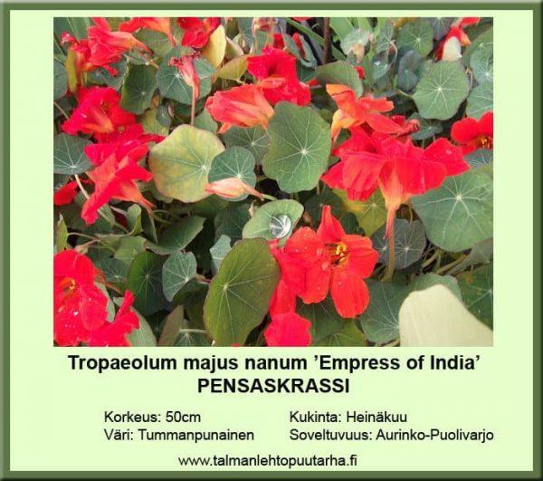 Tropaeolum majus nanum 'Empres of India'