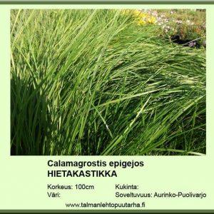 Calamagrostis epigejos Hietakastikka