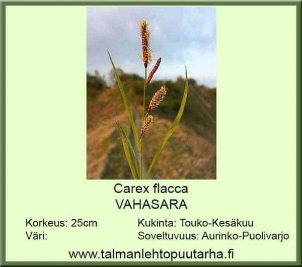 Carex flacca Vahasara