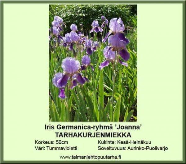 Iris Germanica-ryhmä 'Joanna' Tarhakurjenmiekka