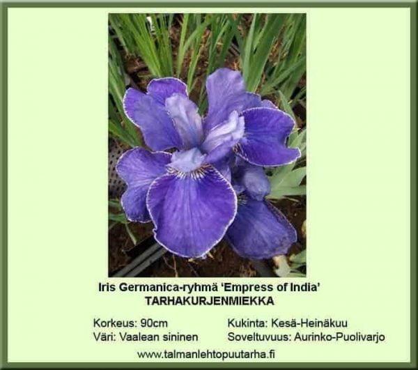 Iris Germanica-ryhmä 'Empress of India' Tarhakurjenmiekka