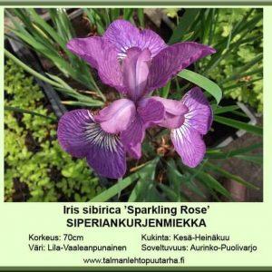 Iris sibirica 'Sparkling Rose' Siperiankurjenmiekka