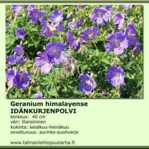 Geranium himalayense Idänkurjenpolvi