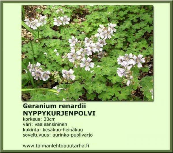 Geranium renardii Nyppykurjenpolvi