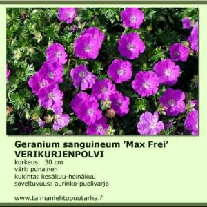 Geranium sanguineum 'Max Frey' Verikurjenpolvi