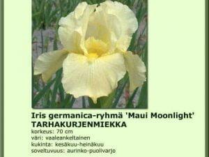 Iris Germanica-ryhmä 'Maui Moonlight' Tarhakurjenmiekka